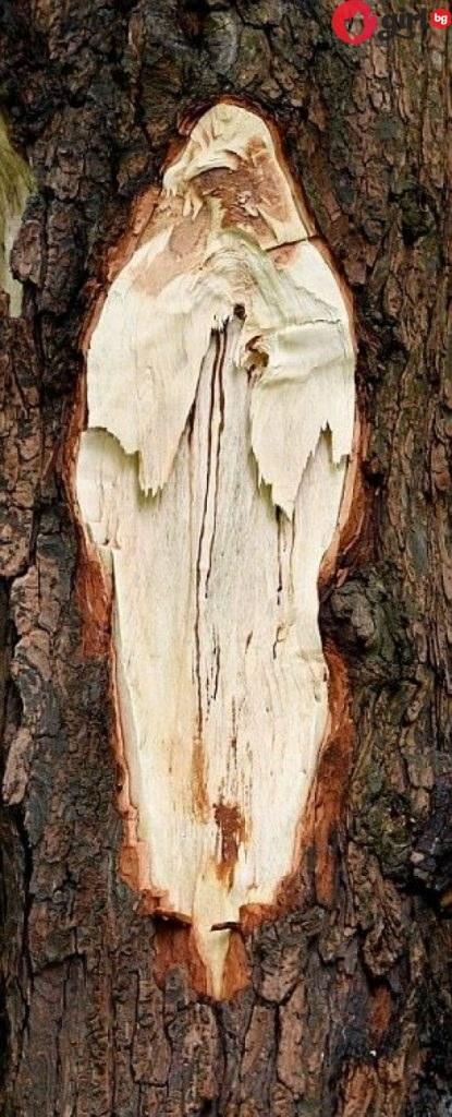 Дърво с лика на Майка Тереза