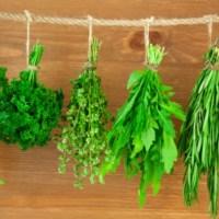 Най-добрата билка за отслабване – главозамайващата рецепта на Ванга