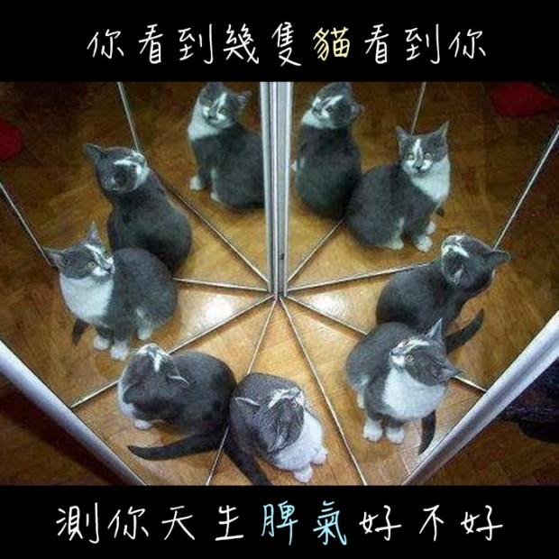 246_你看到幾隻貓看到你,測你天生脾氣好不好_主圖.jpg