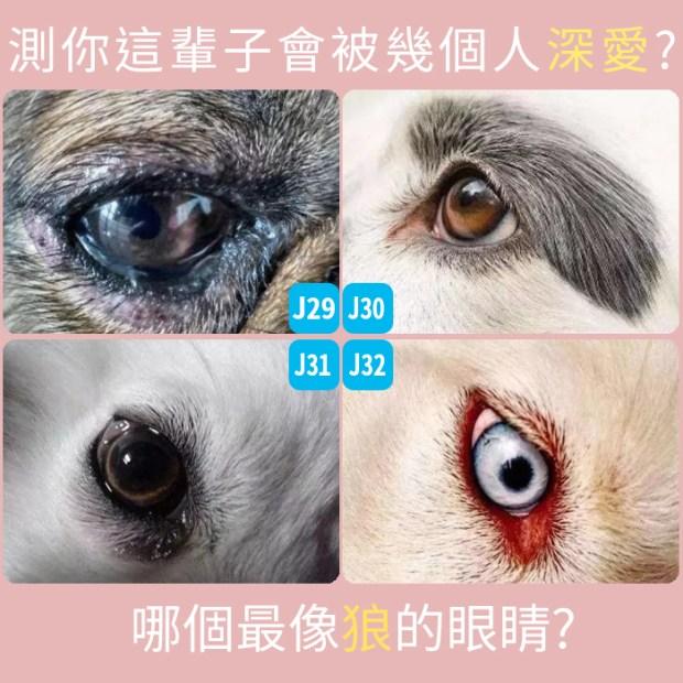 266_哪個最像狼的眼睛,測你這輩子會被幾個人深愛_主圖.jpg