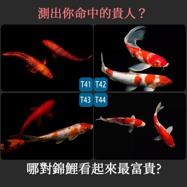 357_哪對錦鯉看起來最富貴,測出你命中的貴人_主圖.jpg