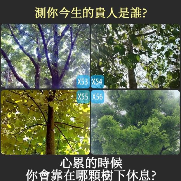 429_心累的時候你會靠在哪顆樹下休息?測你今生的貴人是誰_主圖.jpg