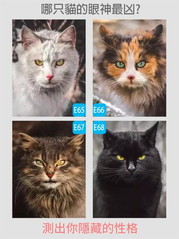 【個性心理測驗】哪只貓的眼神最凶?測試你隱藏的性格?