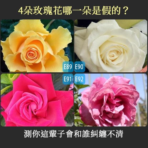 621_4朵玫瑰花哪一朵是假的?測你這輩子會和誰糾纏不清
