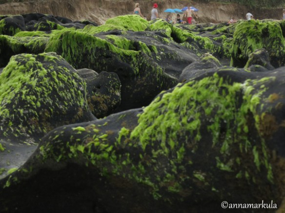 coffeerock_and_algae