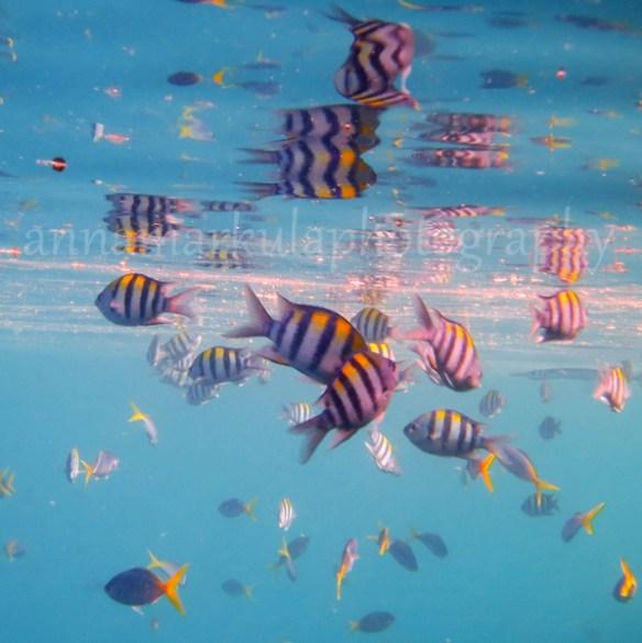fish_square2