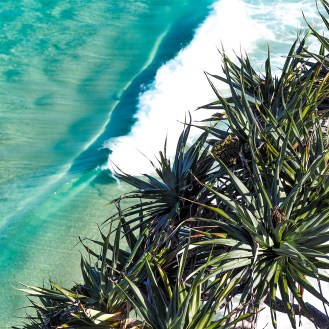 Pandanus Wave Break
