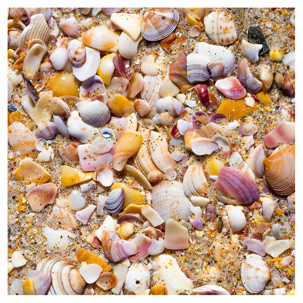 photograph of small shells