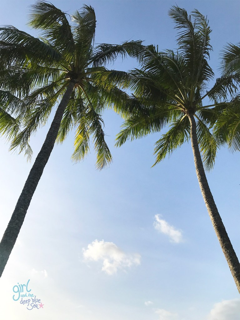 pair of palm trees and sky in tropical North Queensland