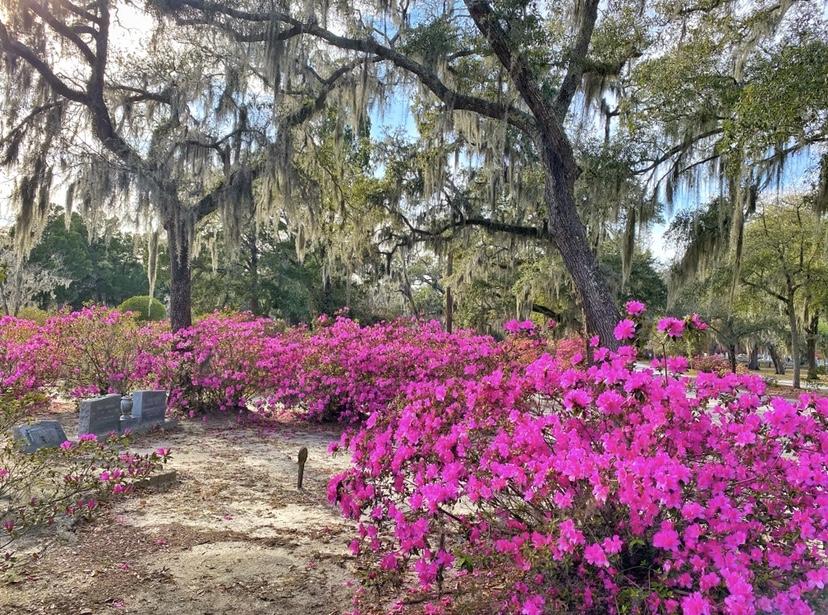 Why you need to visit Savannah GA in spring.