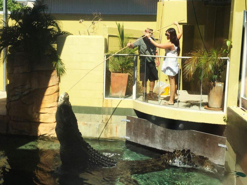 Feeding the giant crocs