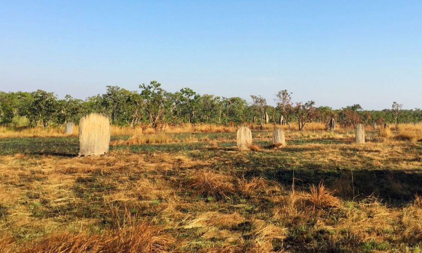 The tomb-like magnetic termite mounds
