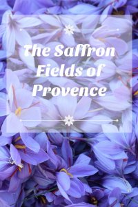 The Saffron Fields of Provence - www.girlgonegallic.com