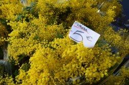 Mimosa Photo Gallery - Flower Bouquetquet