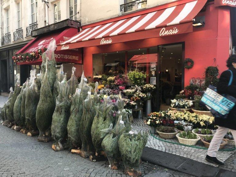 Parisian Holiday Season - Les Sapins - Christmas Trees