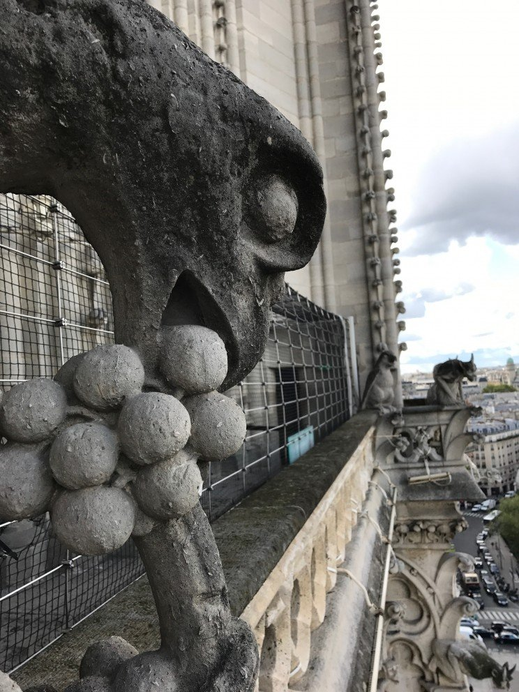Honoring Notre-Dame-de-Paris - Gargoyle and grapes