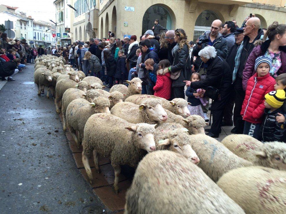 La Transhumance - Saint Remy de Provence