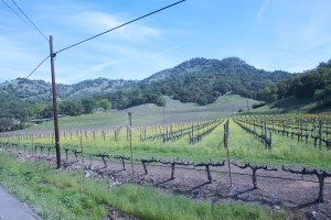 Napa_Vineyard5