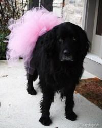 dog costume | Girl, Guy, Dog, Cat