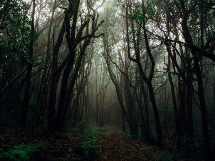 Dark, foggy forest