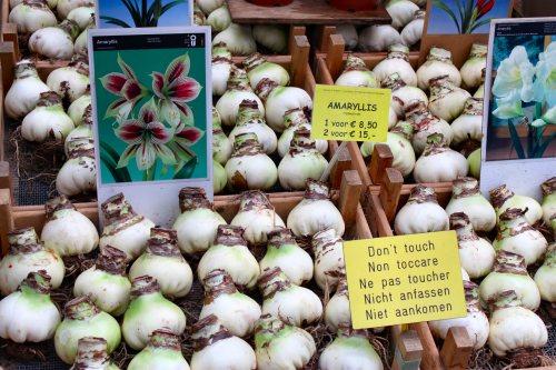 amsterdam-bloemen-market-bulbs