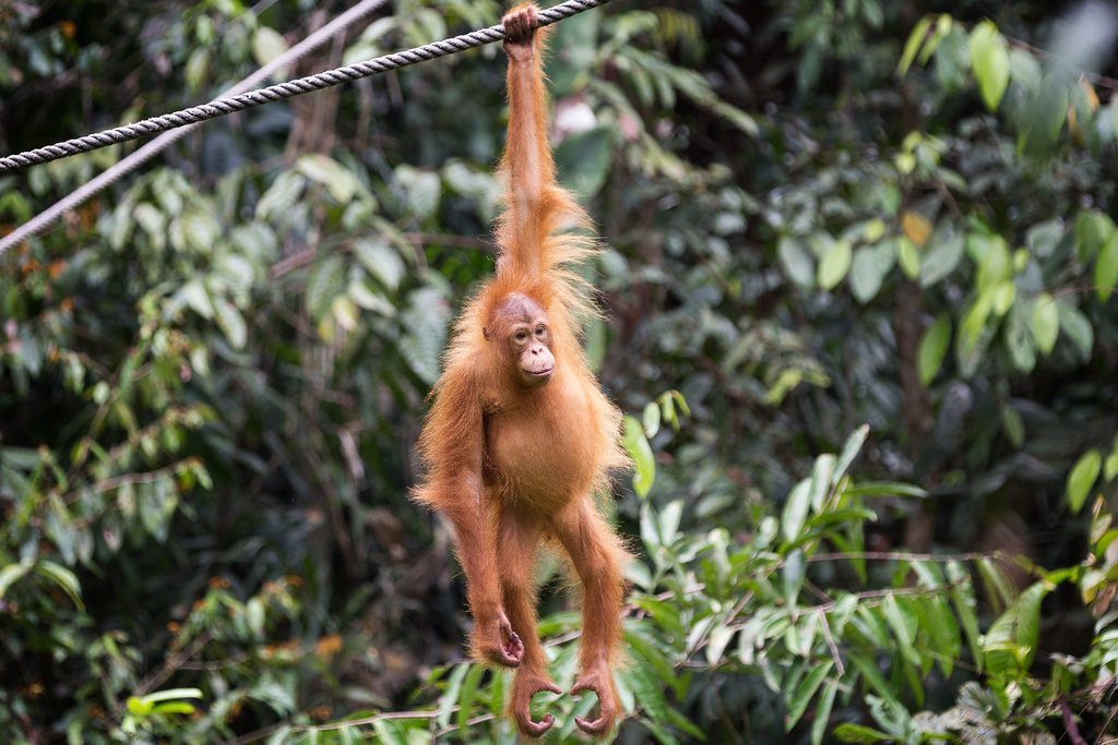 girlinchief-five-islands-you-have-to-add-to-your-bucket-list-borneo