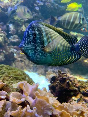 Picture of a fish at the National Aquarium in Baltimore