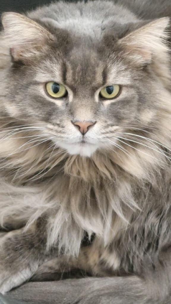 Close up picture of Marie's cat, Minou
