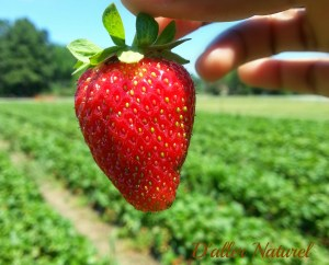 Isn't that the most perfect strawberry?