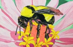 Bumble Bee in Zinnia - Girl Next Door Honey