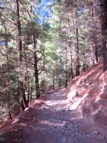 The pine-clad trail through Samaria Gorge