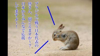 usagi04.jpg