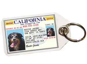 The tag should include the pet's name, your name, and the destination address and your number