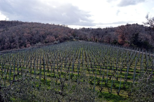 Il Caberlot vineryards
