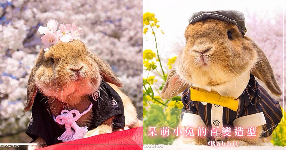 世上最潮的兔子!來自日本的小萌兔PuiPui。百變穿搭融化你的心~ – GirlsMood 女生感覺