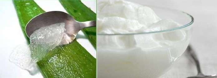 Use-of-Curd-or-Aloe-Vera