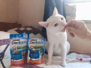 Dentalife Cat