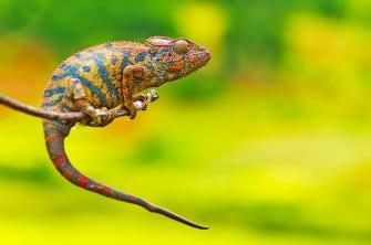 ©Flickr.com: Madagascar