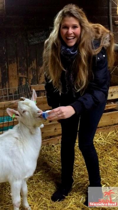 goat-farm