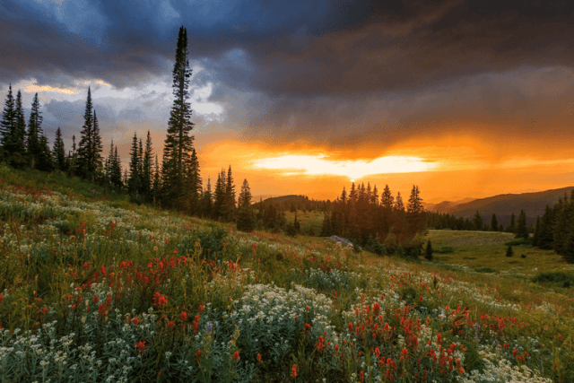 Wildflower sunset in the Rocky Mountains, Colorado, USA