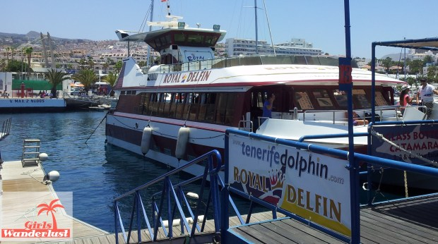 15 Harmful animal tourist attractions to avoid by Girlswanderlust -  Dolphin cruise.jpg