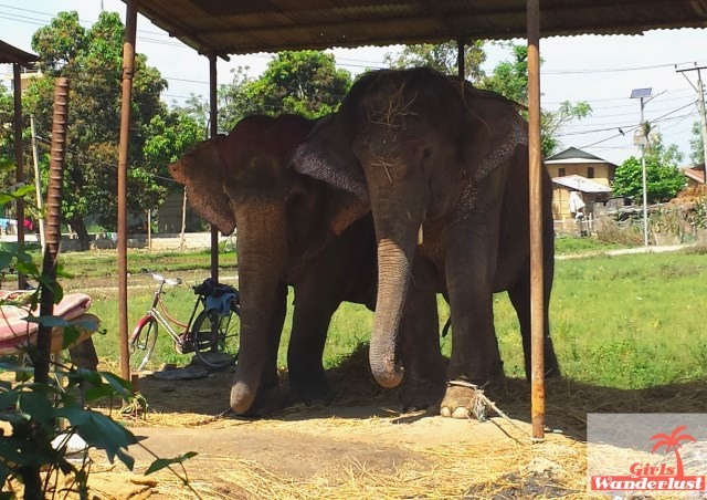 15 Harmful animal tourist attractions to avoid by Girlswanderlust - Elephants