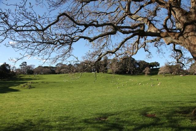 Cornwall Park Auckland. Girlswanderlust.com #girlswanderlust #auckland #nz #newzealand #travel