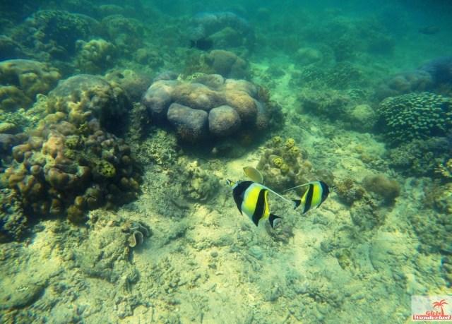 Gili Nanggu, Gili Tangkong, Gili Kedis and Gili Sudak – The paradise islands of Lombok via @Girlswanderlust. Snorkel 3. #girlswanderlust #gili #lombok #indonesia #gilinanggu #nanggu #kedis #sudak.jpg