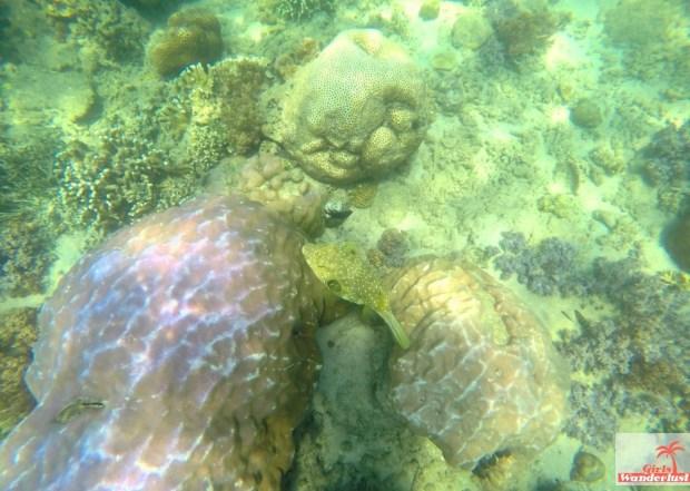 Gili Nanggu, Gili Tangkong, Gili Kedis and Gili Sudak – The paradise islands of Lombok via @Girlswanderlust. Snorkel 4. #girlswanderlust #gili #lombok #indonesia #gilinanggu #nanggu #kedis #sudak.jpg