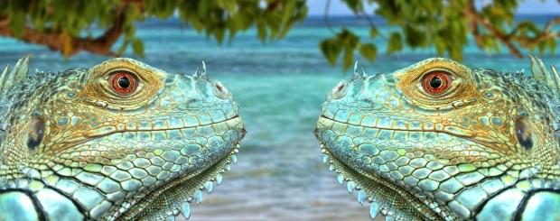 Discovering the Wonderful Wildlife in the Cayman Islands by @girlswanderlust #Cayman #Islands #caymanislands #uk #united #kingdom #girlswanderlust #wanderlust #Britsh #Carribean #travel #travel.jpg