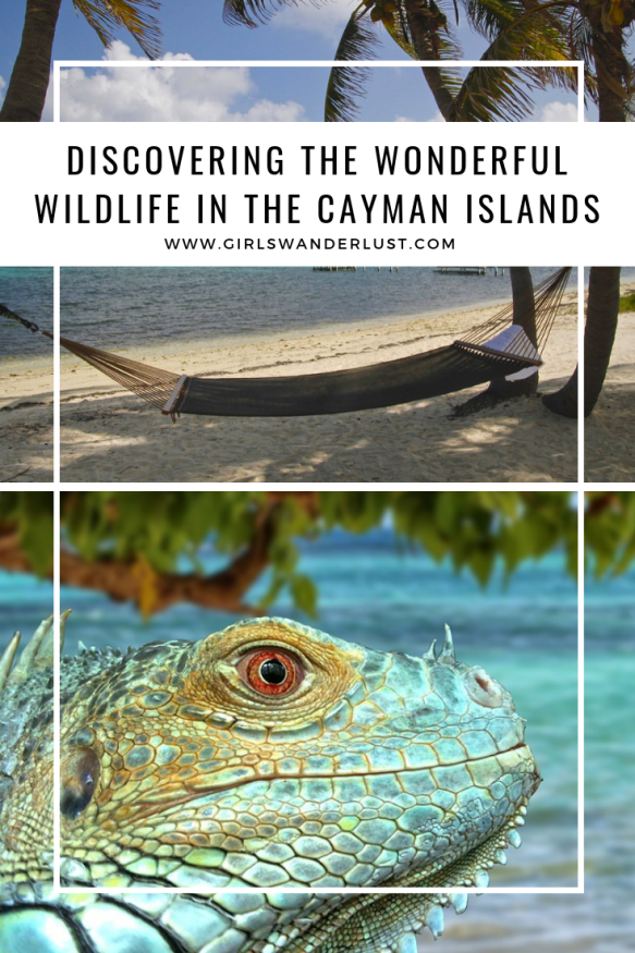 Discovering the Wonderful Wildlife in the Cayman Islands.png