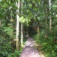 Taman Negara, Malaysia: one of the world's oldest tropical rainforests!