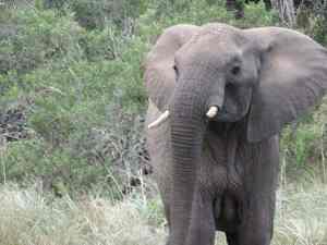 Girls Who Travel   A Wild Elephant