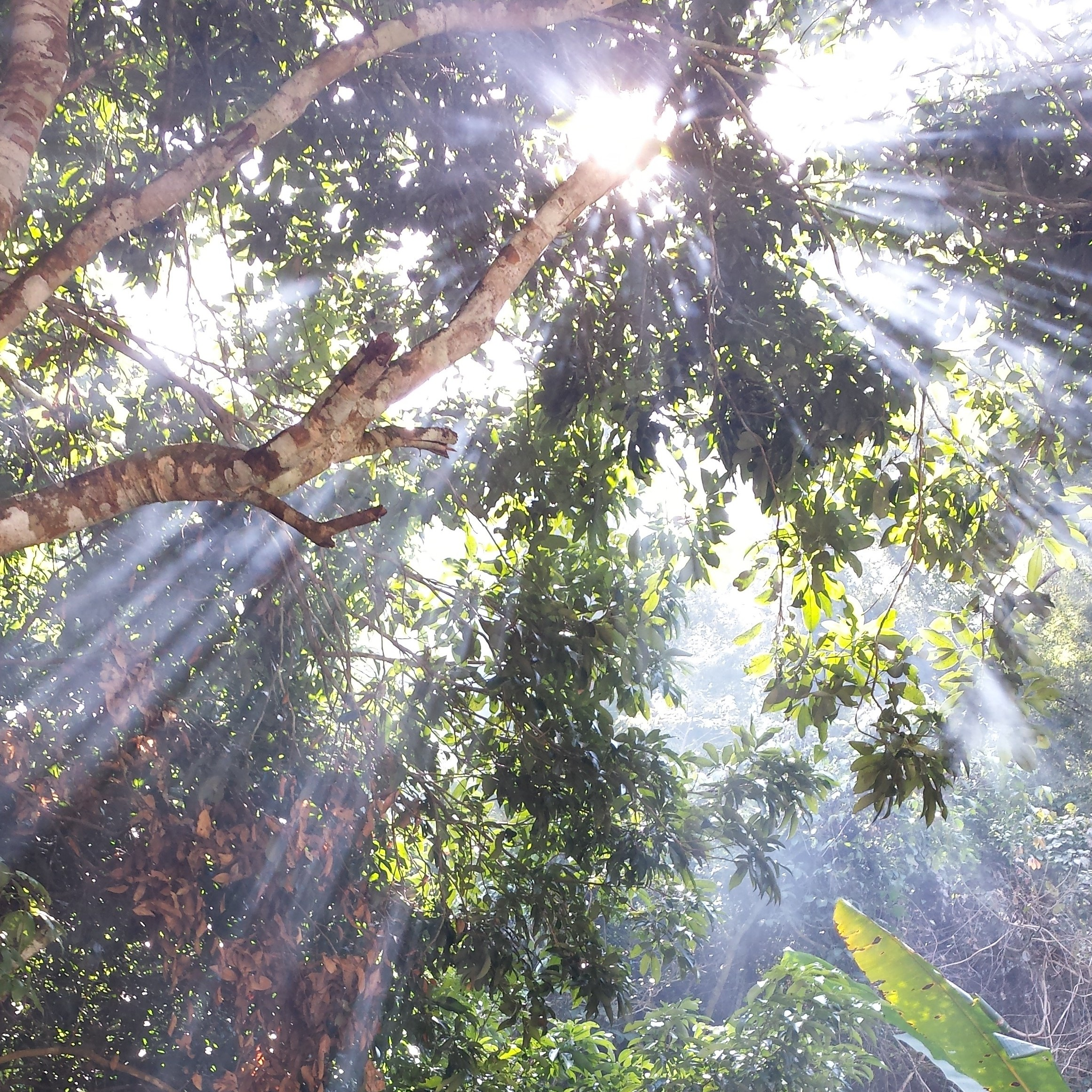 Sunlight through Trees in Thailand